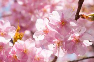 Những loài hoa thể hiện sự quyết tâm mạnh mẽ