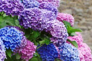 Những loài hoa tượng trưng cho sự chờ đợi trong tình yêu