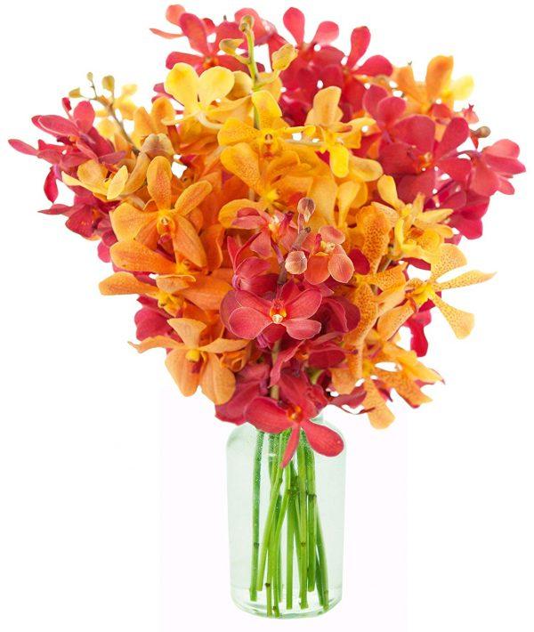 Ý nghĩa của hoa lan mokara – vẻ đẹp tiềm ẩn